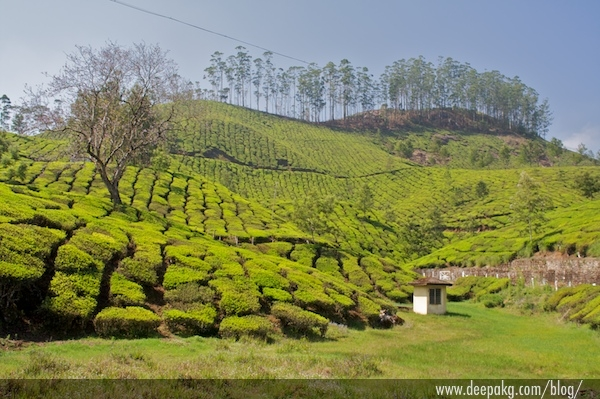 Yet another tea plantation