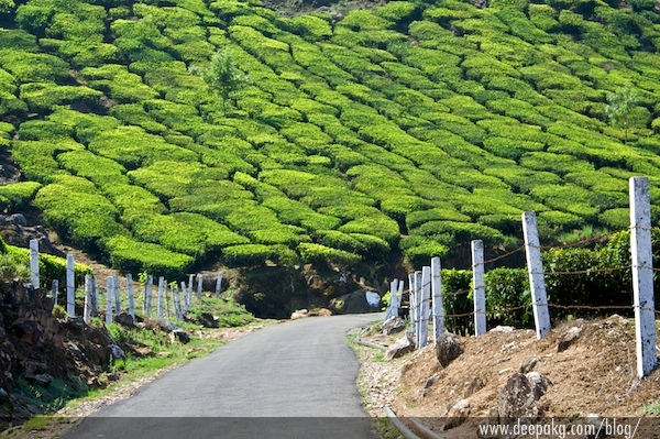A path leading to a tea plantation and beyond