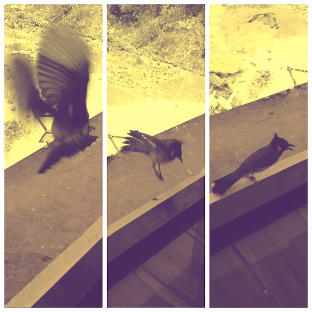 02. Bird copy