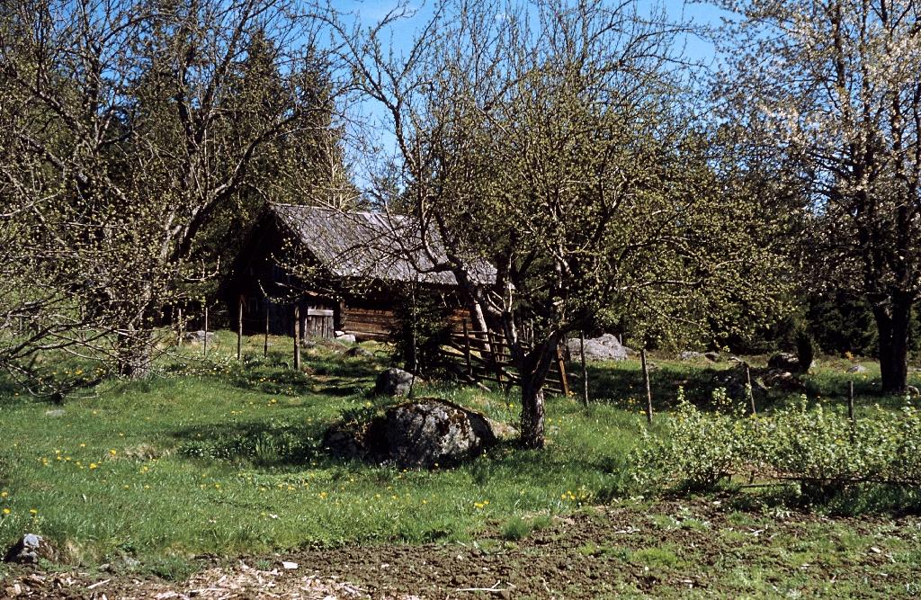 garden of a small farmstead