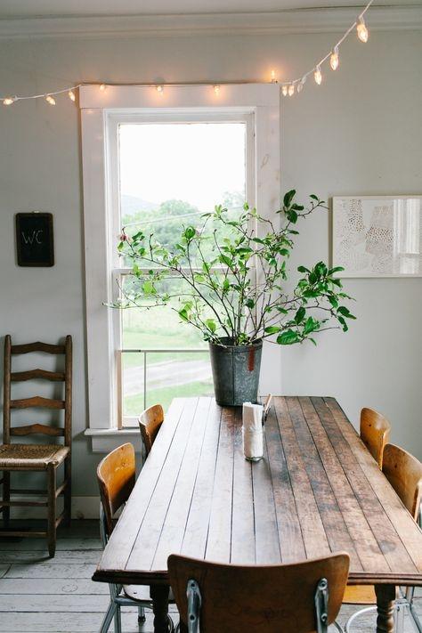[plants] [kitchen]