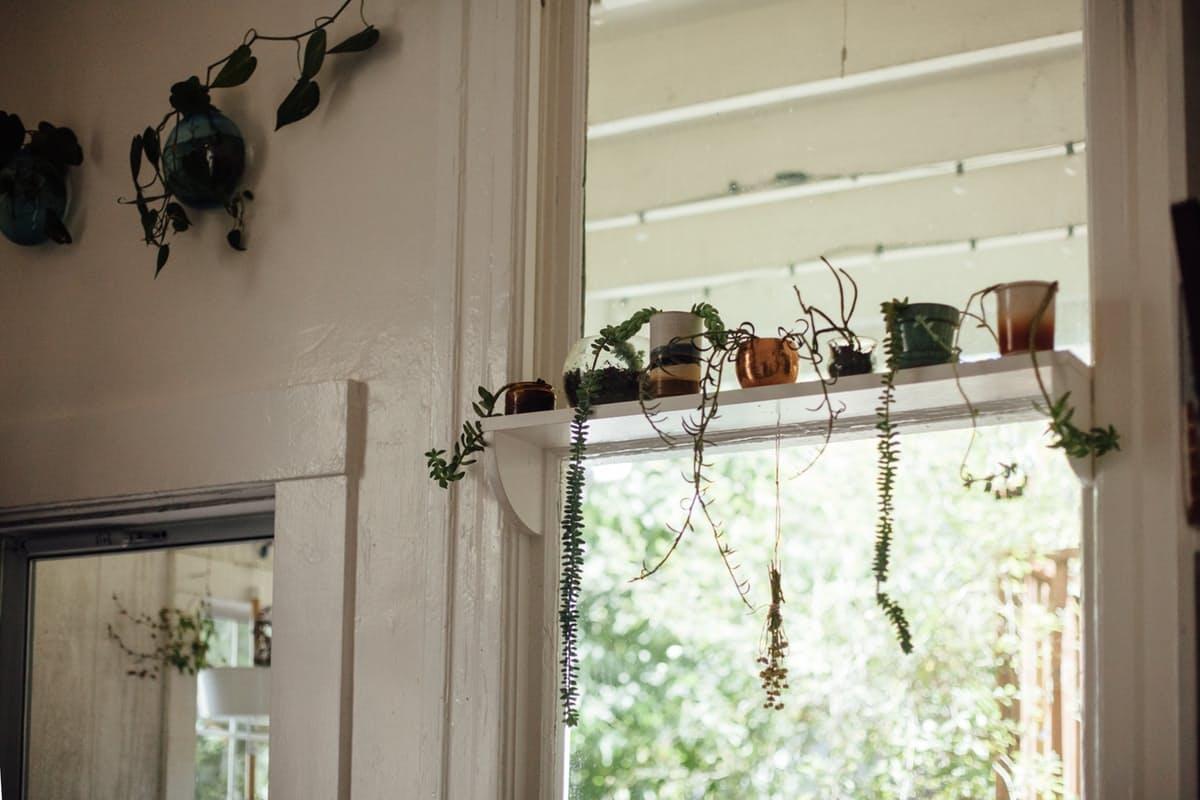 [plants] little guys