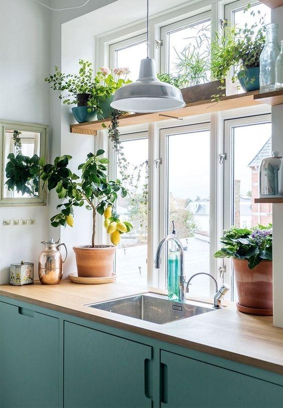 [kitchen][plants]