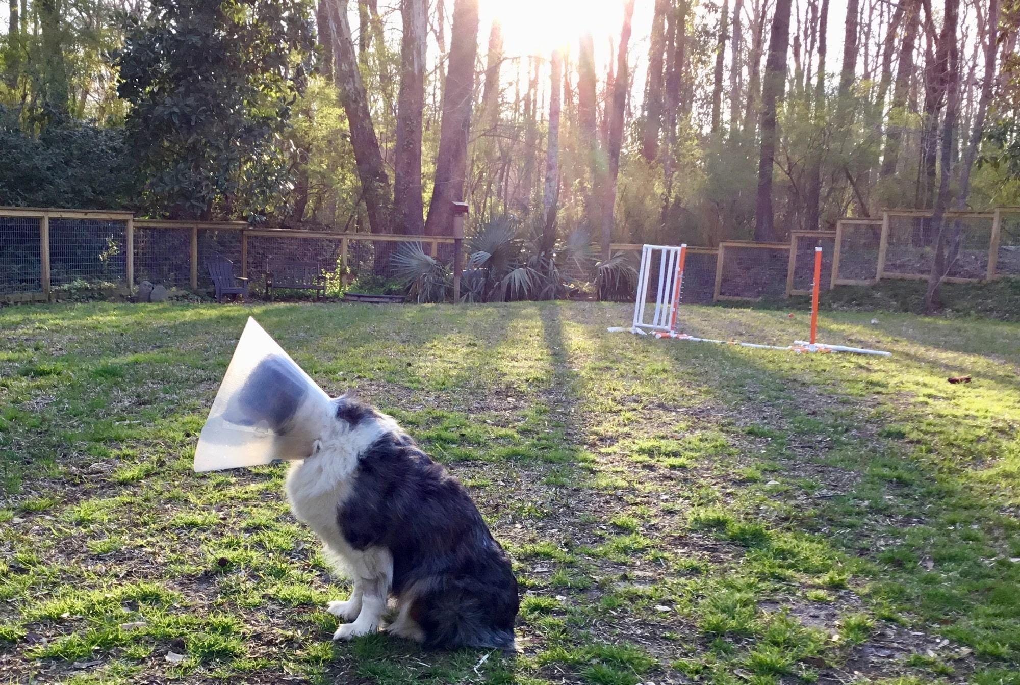 Samba with the cone