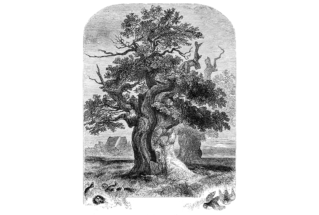 A large oak tree