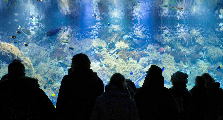 Onder water beesten