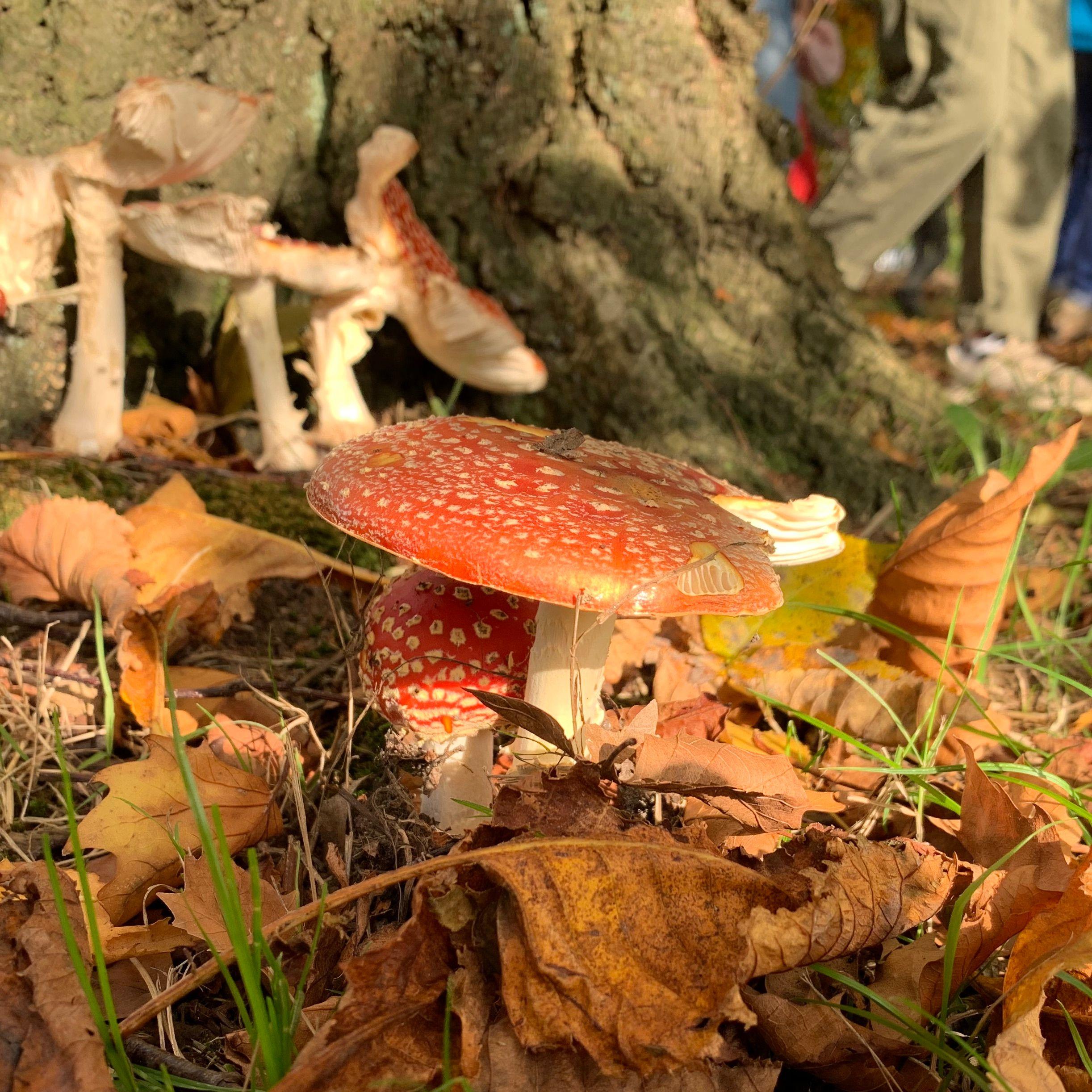 Herfstpaddenstoelen