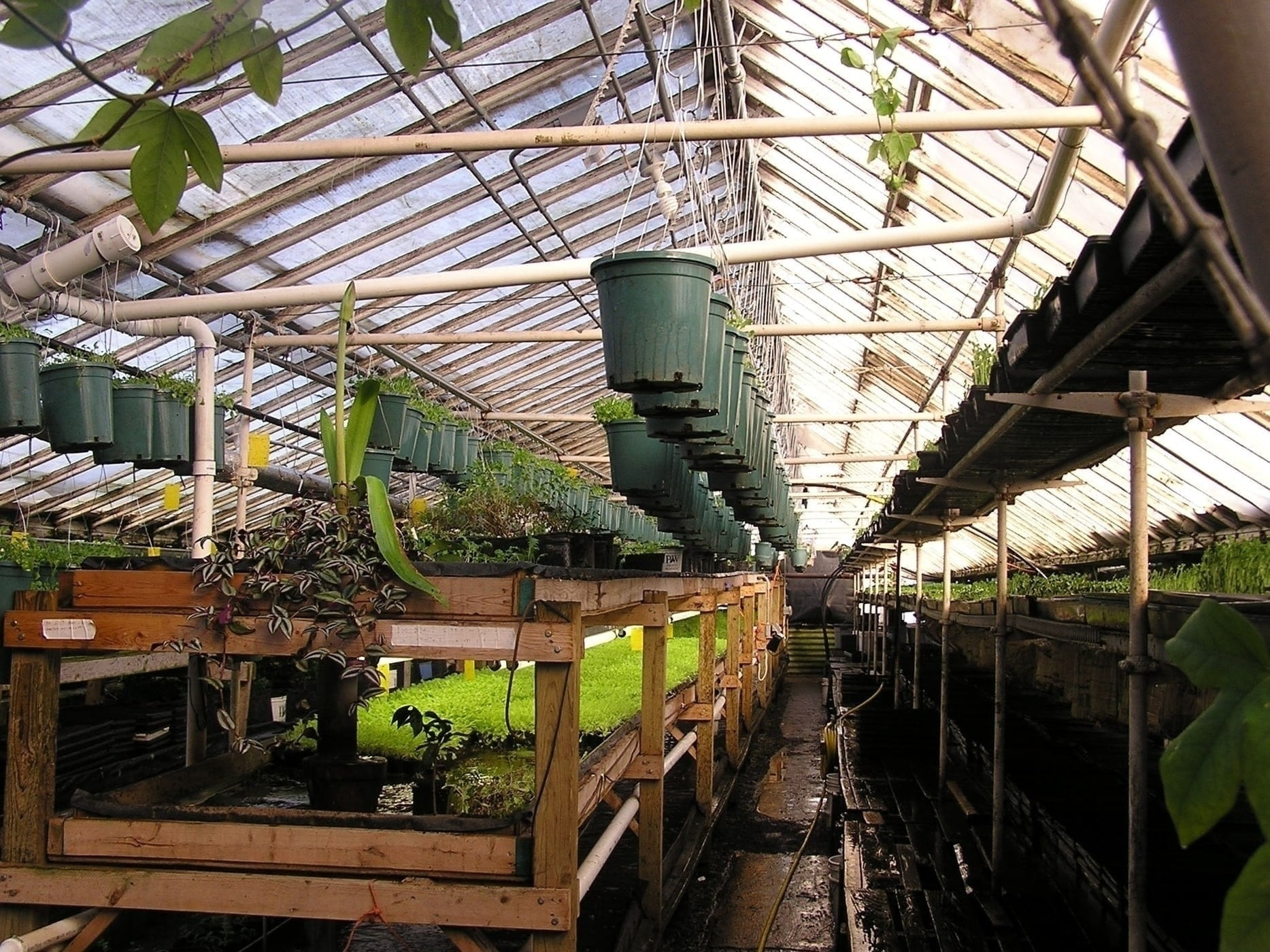 One of the greenhouses of Growing Power, a Milwaukee urban farm run by MacArthur Genius Grant recipient Will Allen. Photo courtesy Flickr user crfsproject. Used in accordance with Creative Commons guidelines.