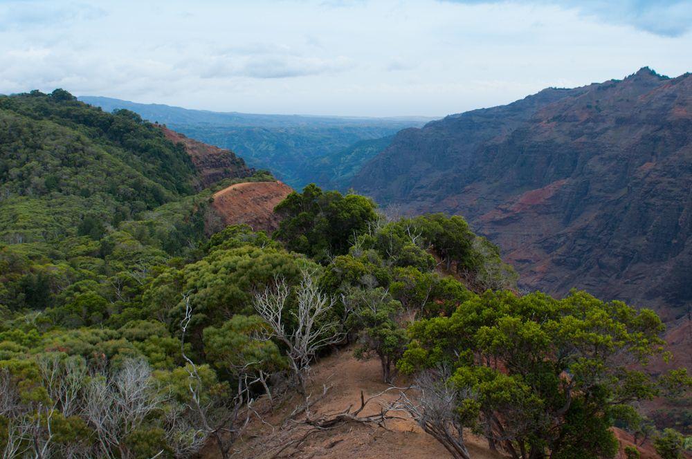 Cliff Viewpoint, Waimea Canyon