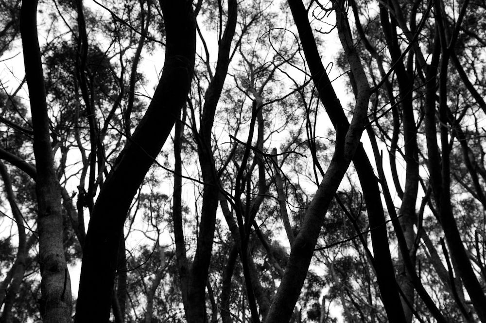 Trees on the Cliff Trail