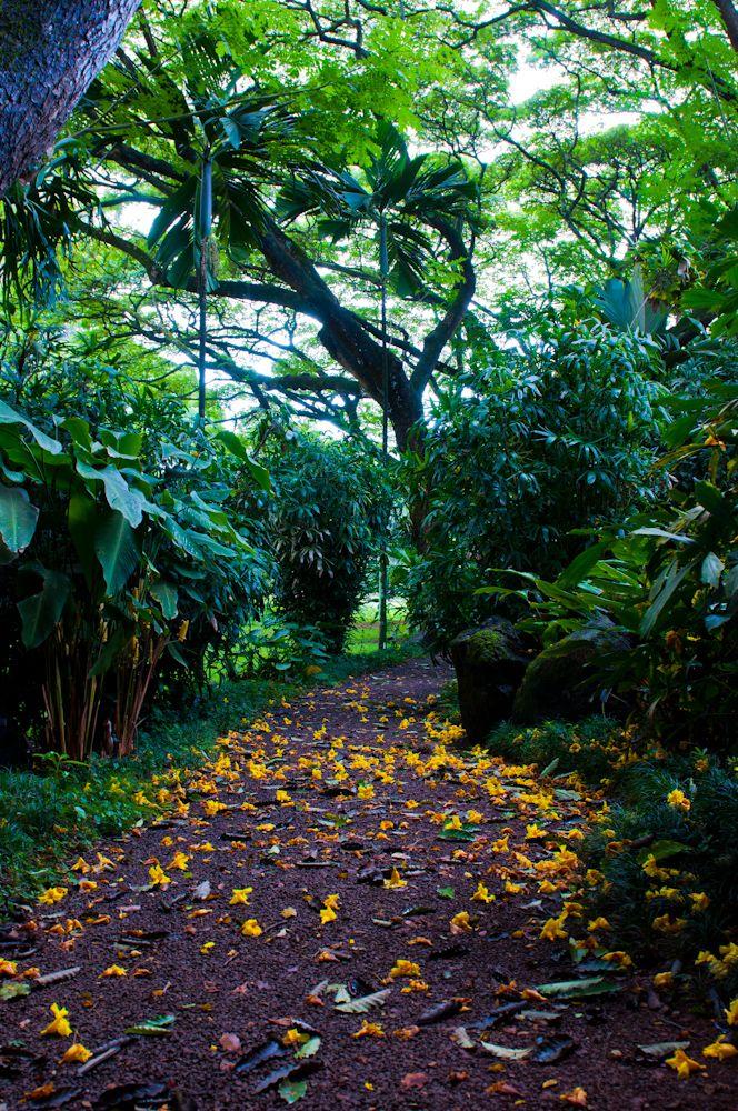 McBryde Garden at National Tropical Botanical Garden