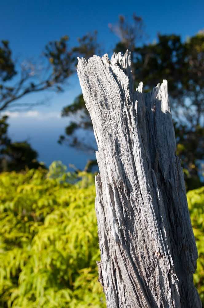 Dead Tree at Kalalau Lookout