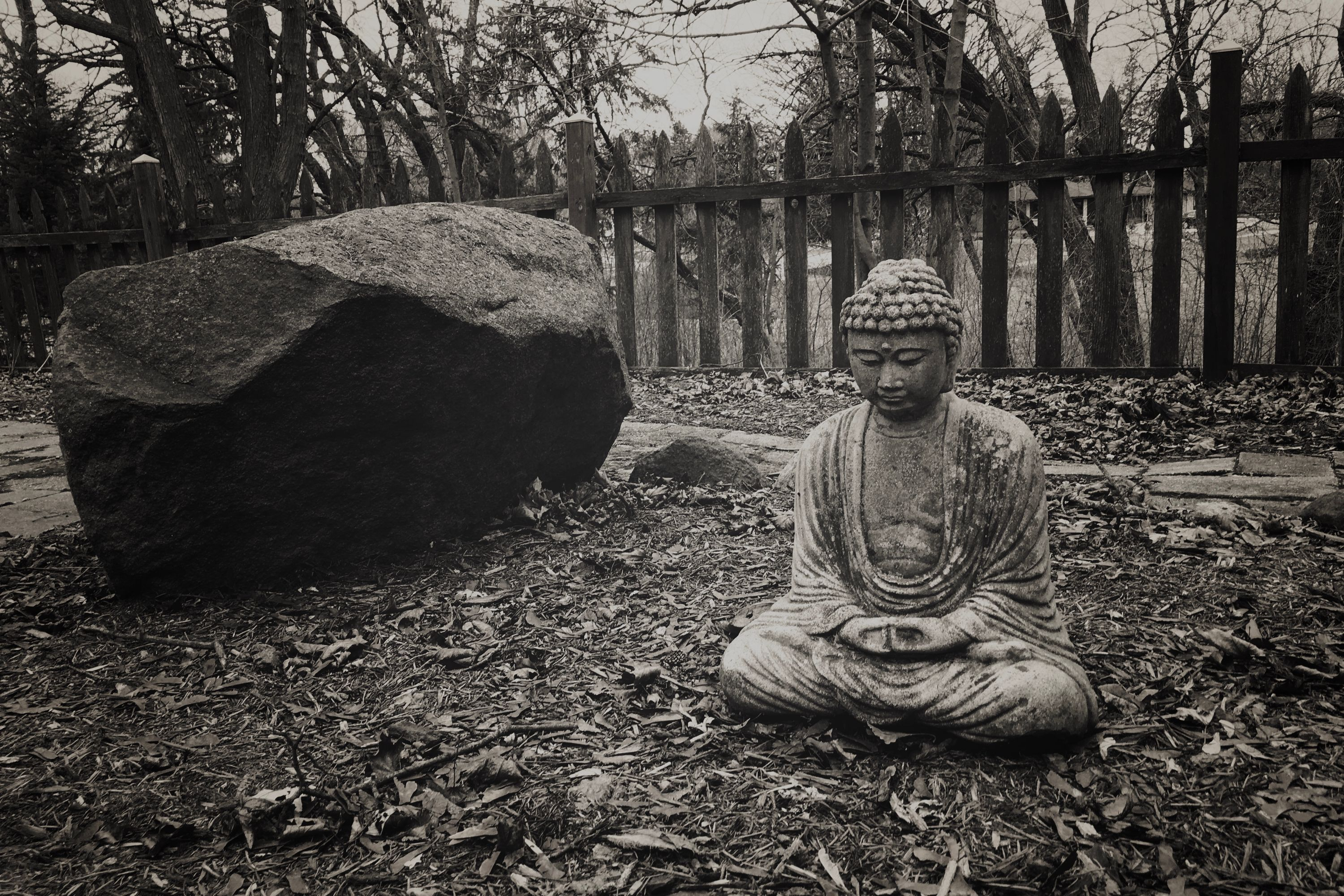 In the garden, he sits, between a rock and the open world