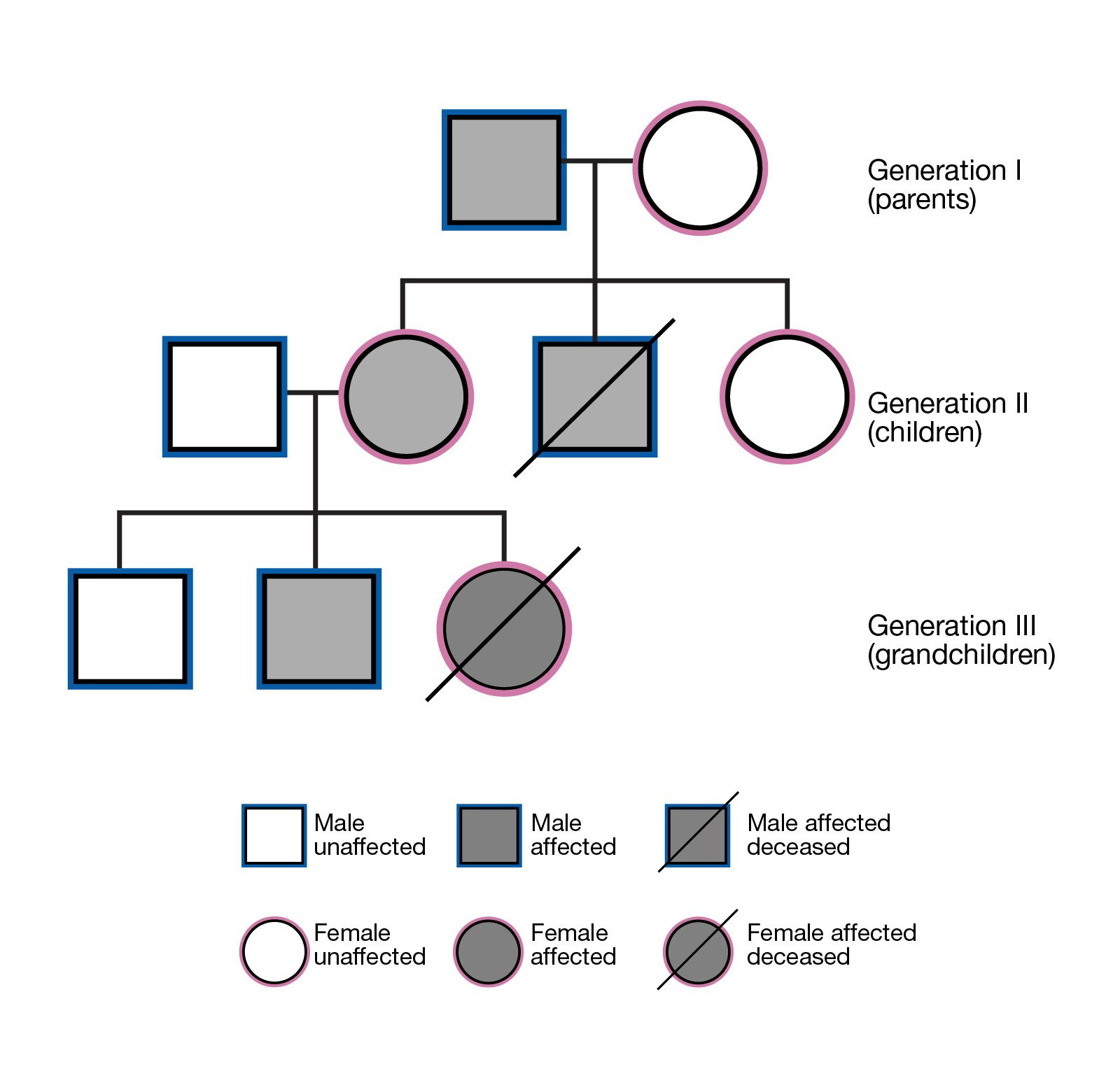 Caption: a family tree showing three generations that includes visual indications of related traits passed between each generation