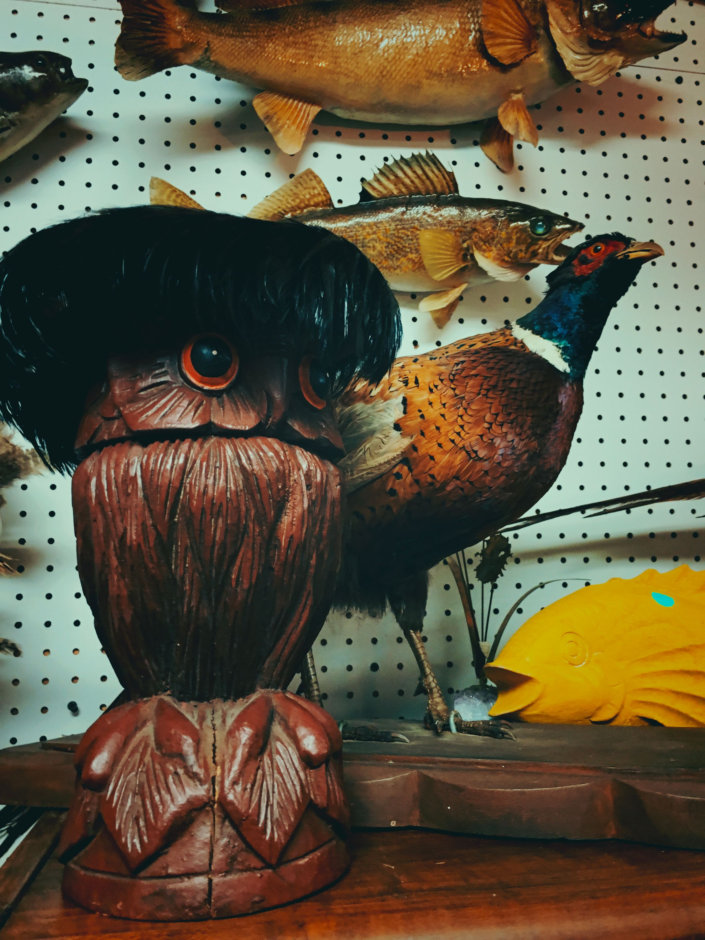 An owl a pheasant and a fish