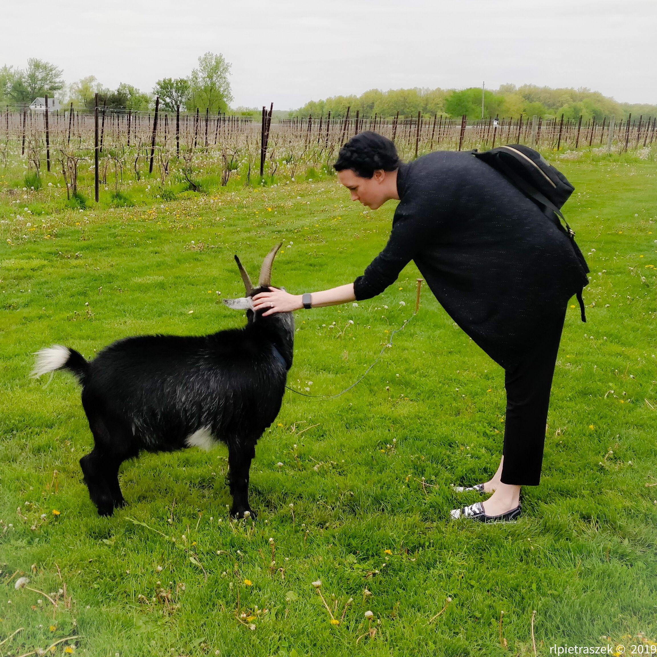 last weekend i met a goat