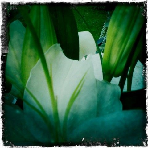 A whitel flower