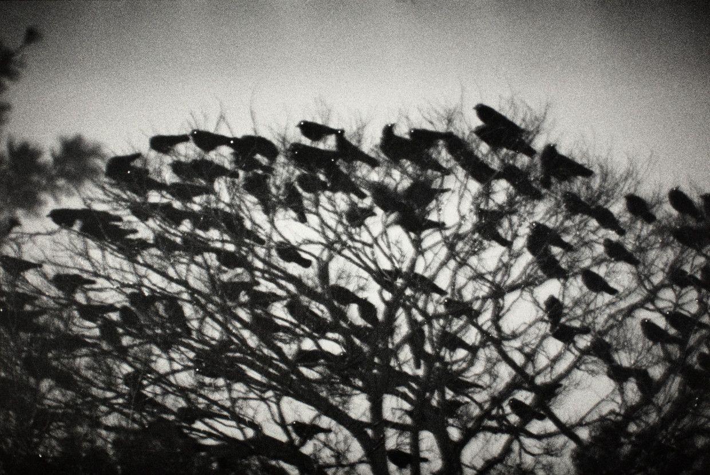 Kanazawa (1977) from Ravens by Masahisa Fukase (1934-2012)
