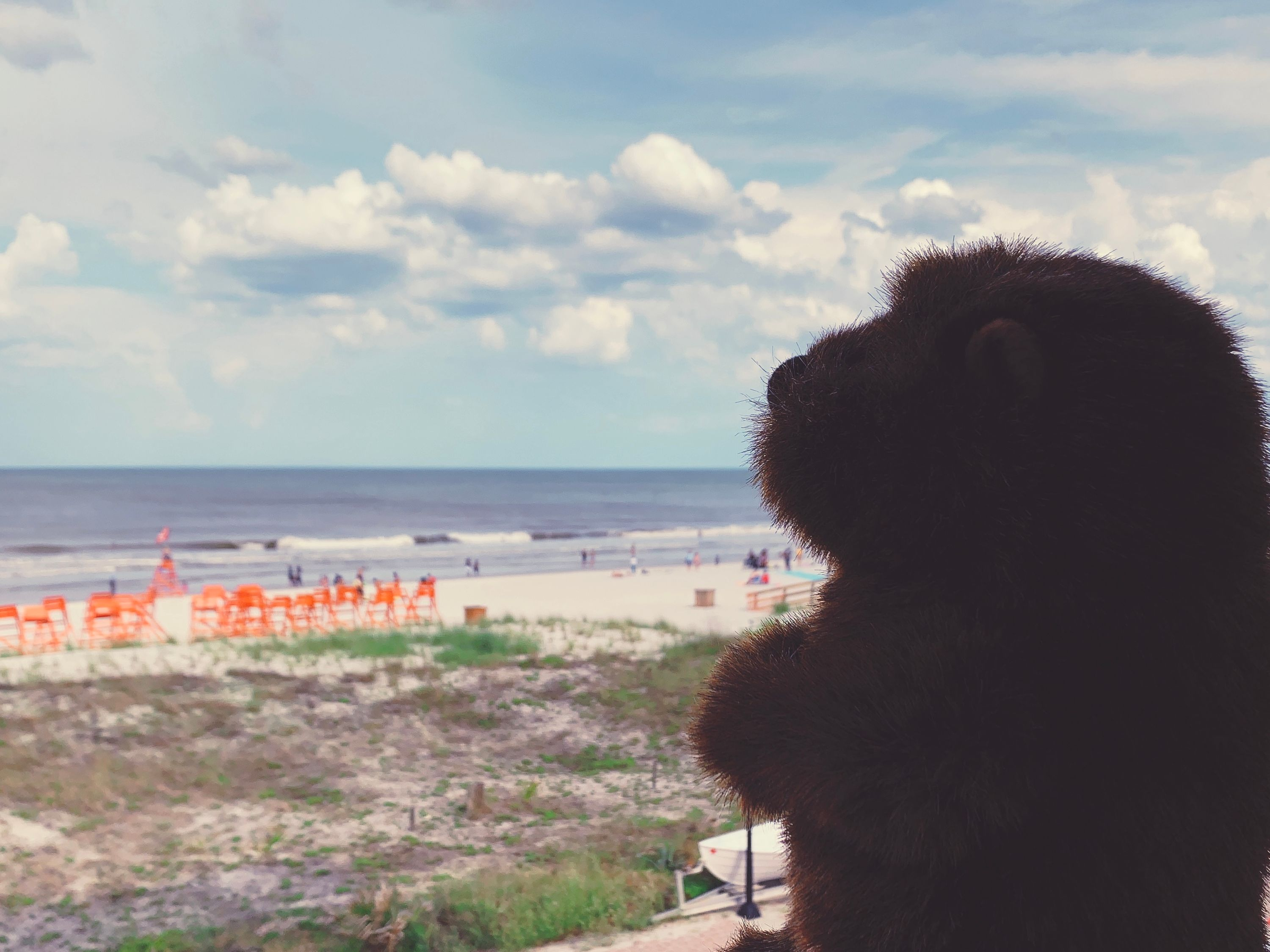 The Groundhog watches the beach from a balcony.
