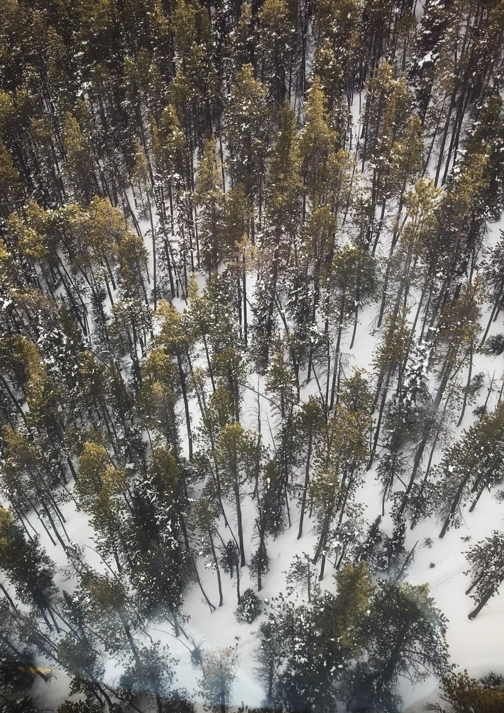 Looking down at the trees from the Sulphur Mountain gondola