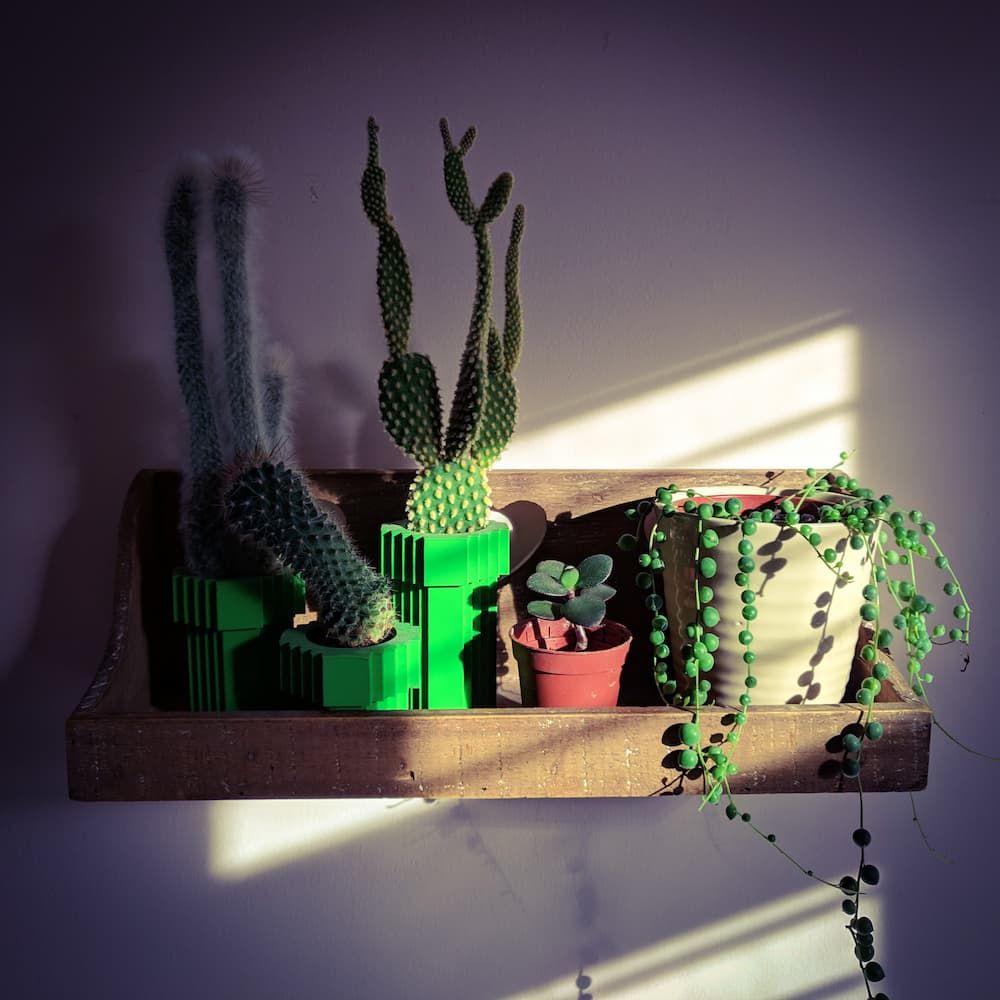 Shelf of succulents