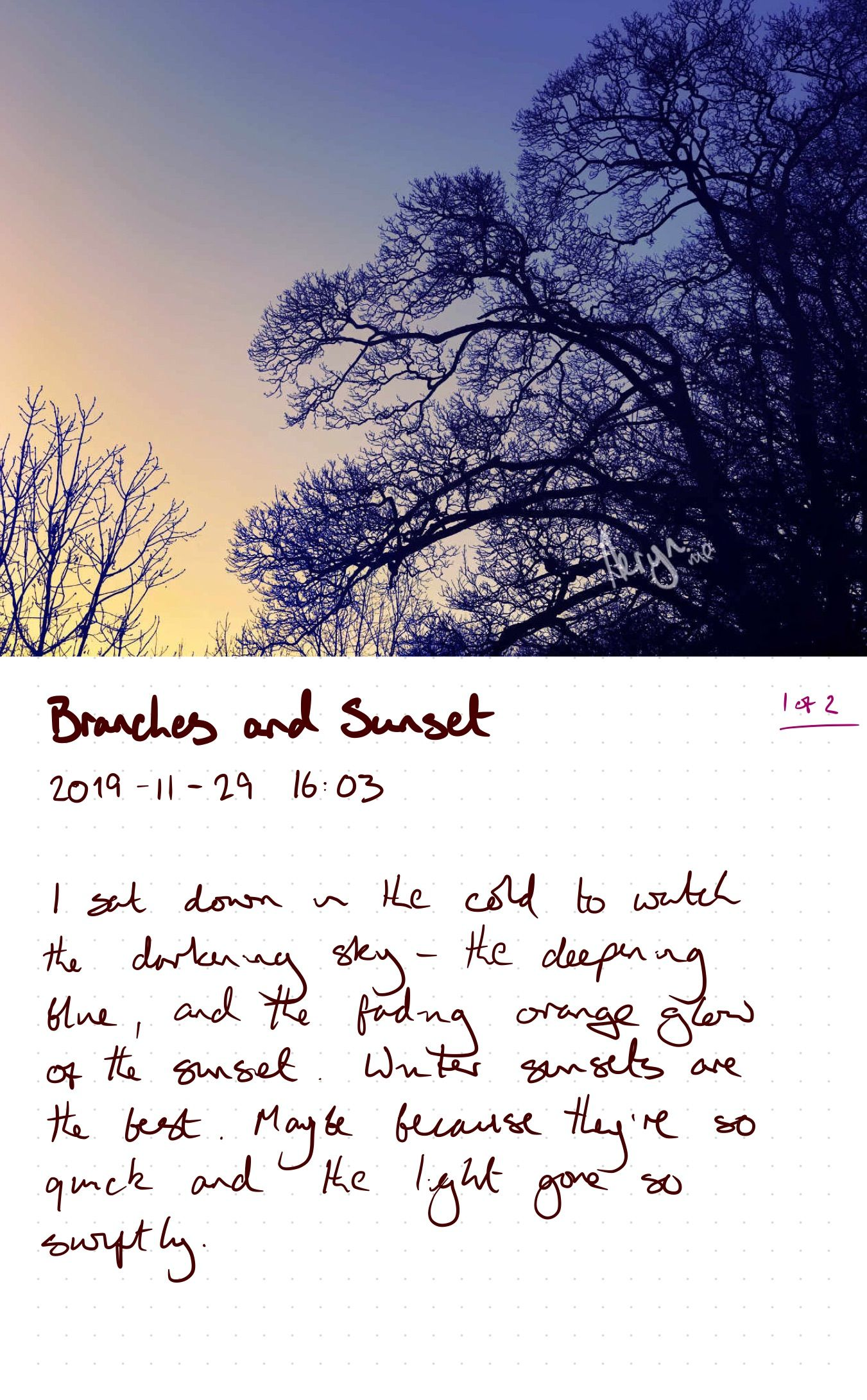 sketchbook branches and sunset-1