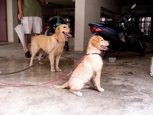 Juno and Bangxi