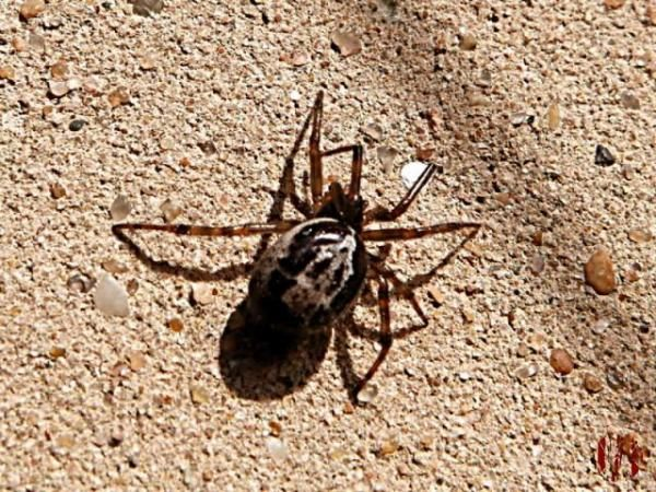 A spider is seen in close up walking on a sunlit wall