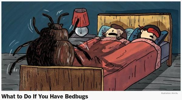 Cartoon style drawing of a couple asleep in a bed with a giant bedbug at the foot of it.