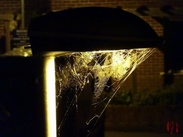 Multiple cobwebs are seen directly below a street light late at night