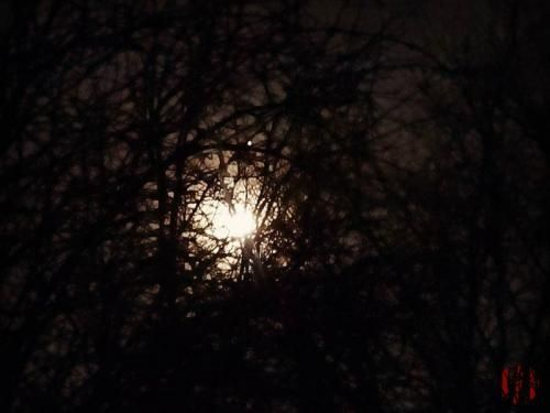 A full moon seen through the branches of trees.