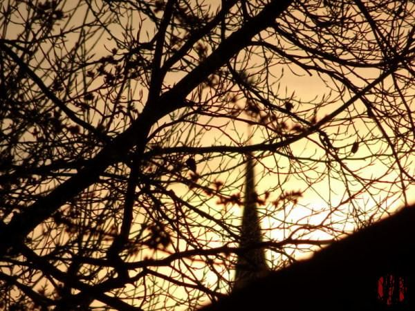 The spire of St. Mary's Church in Horsham seen in the distance through much closer tree branches with the light of the low evening sun coming directly from behind it