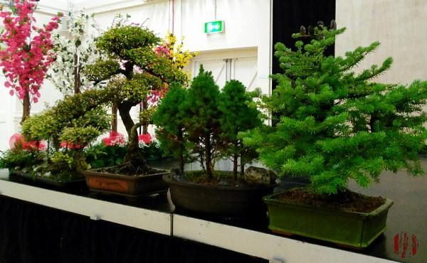 A number of Bonsai trees laid out on the front of a stage.