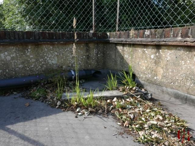 Some flowers, grass and weeds that have grown around the sandbags and wood used in an attempt to divert the flow of water across a flat roof