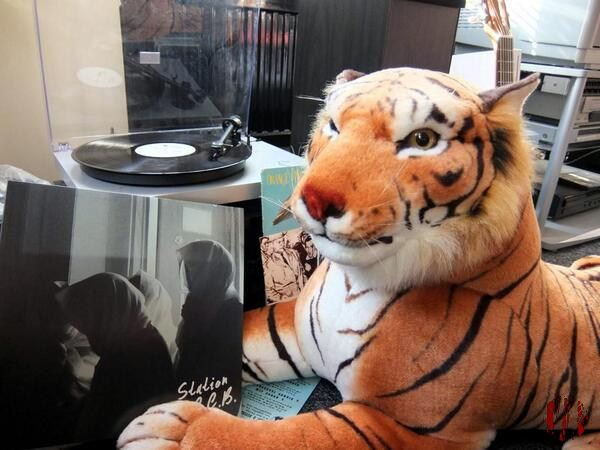 A large cuddly toy tiger holding up a copy of the new Moscow Club LP.