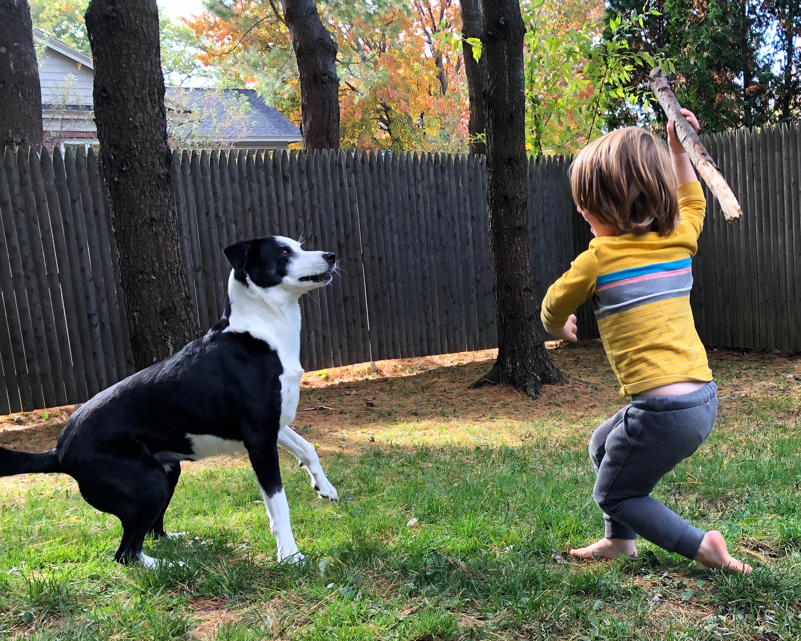 A child throws a stick for a dog.