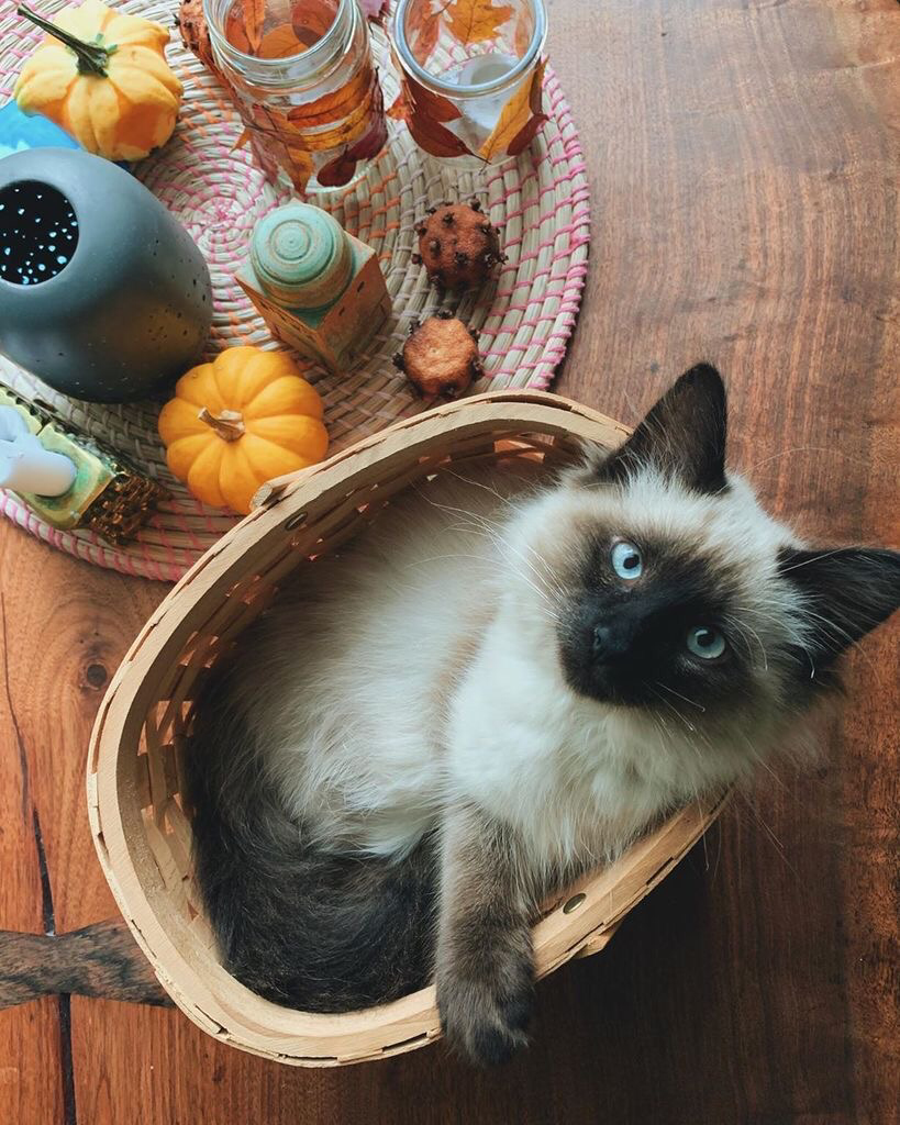 A cat in a basket. Highly staged photo.