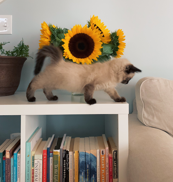 Kitten on a bookshelf. Behind the cat is a small bouquet of sunflowers.