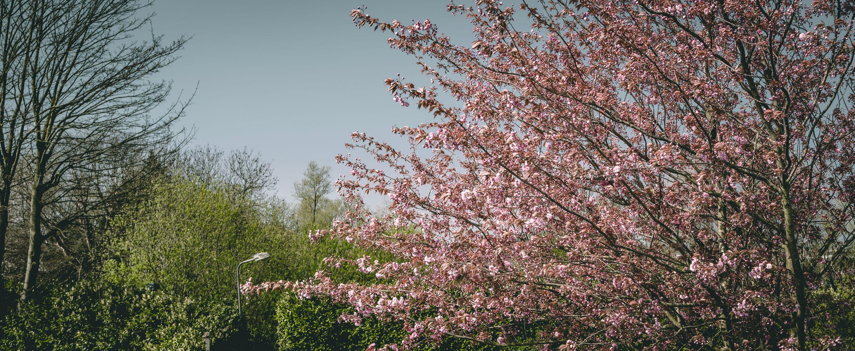 volkstuintjes blossom