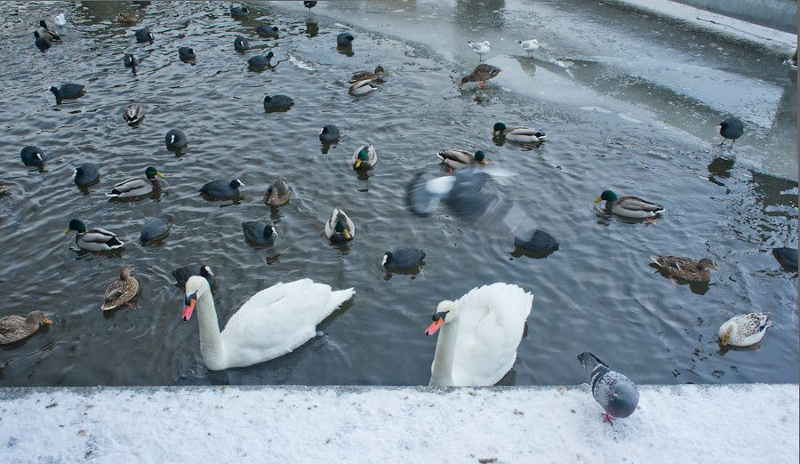 Birds acting a touch restless in the frozen canals