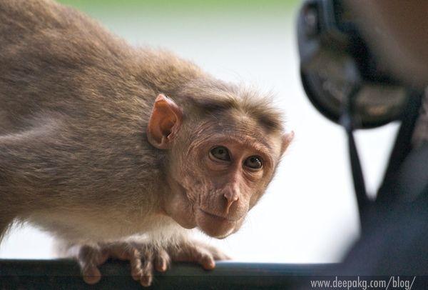 Crouching Monkey Hidden Lens