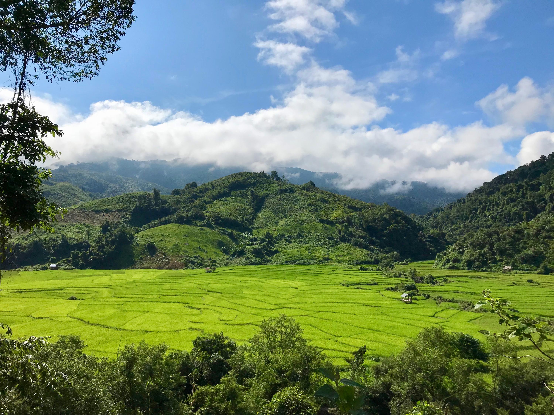 Rice fields