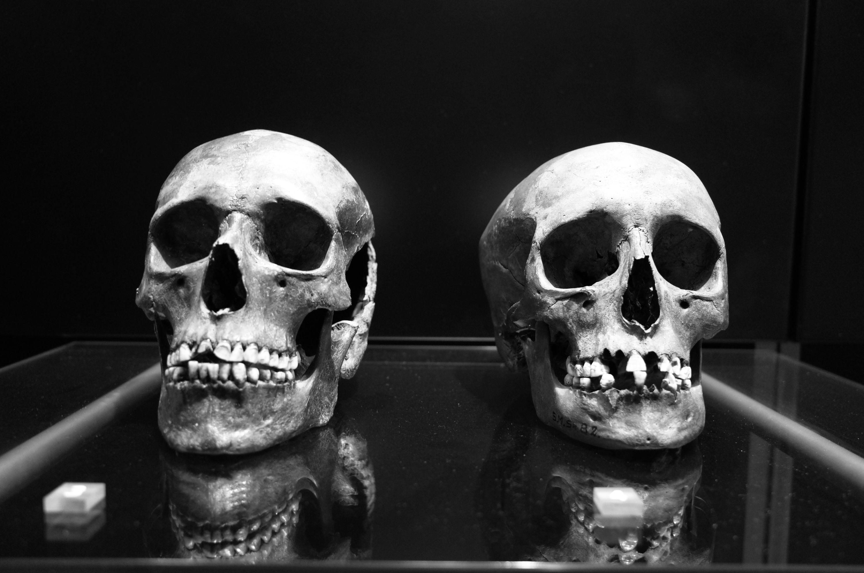 skulls 34371556506 o