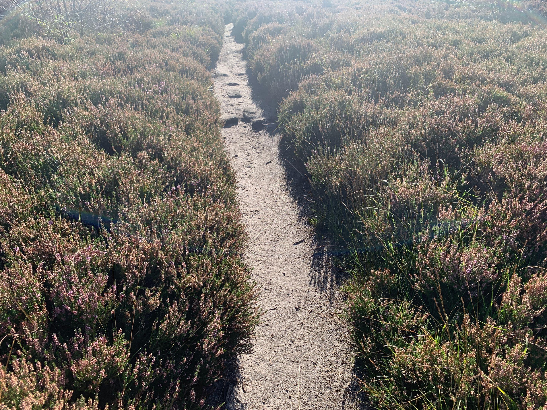 Brimham Rocks heather