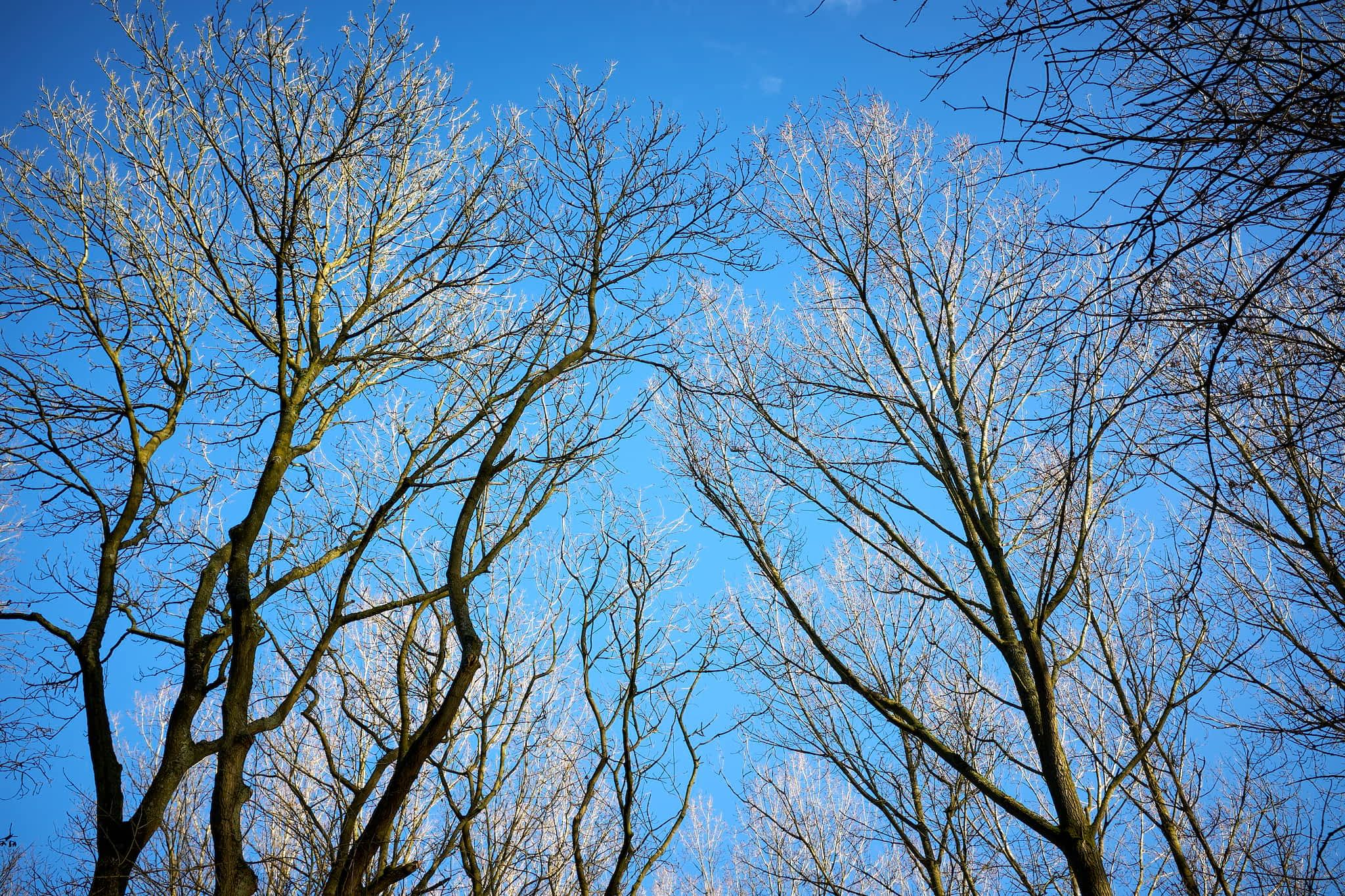 bare trees against blue sky
