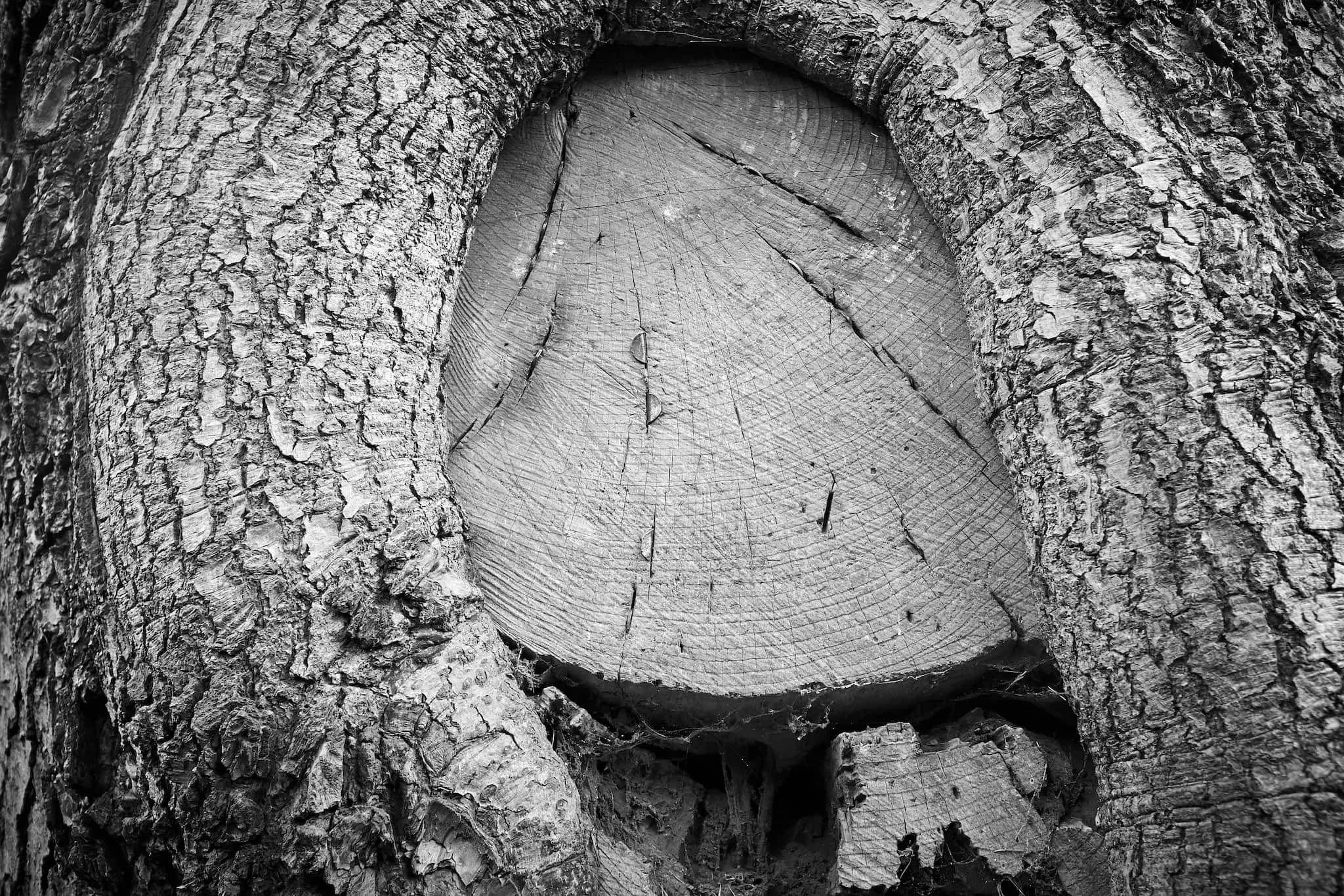cedar and coins