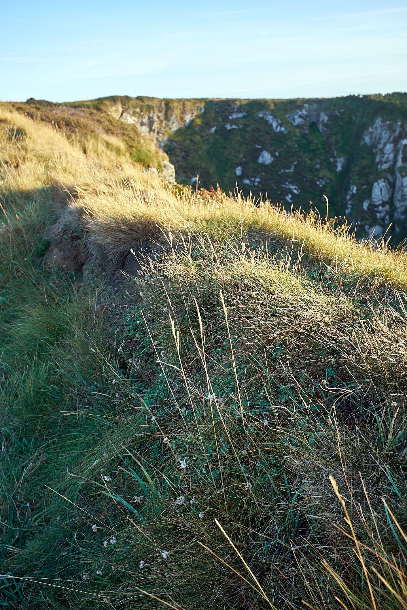 low sun on grass