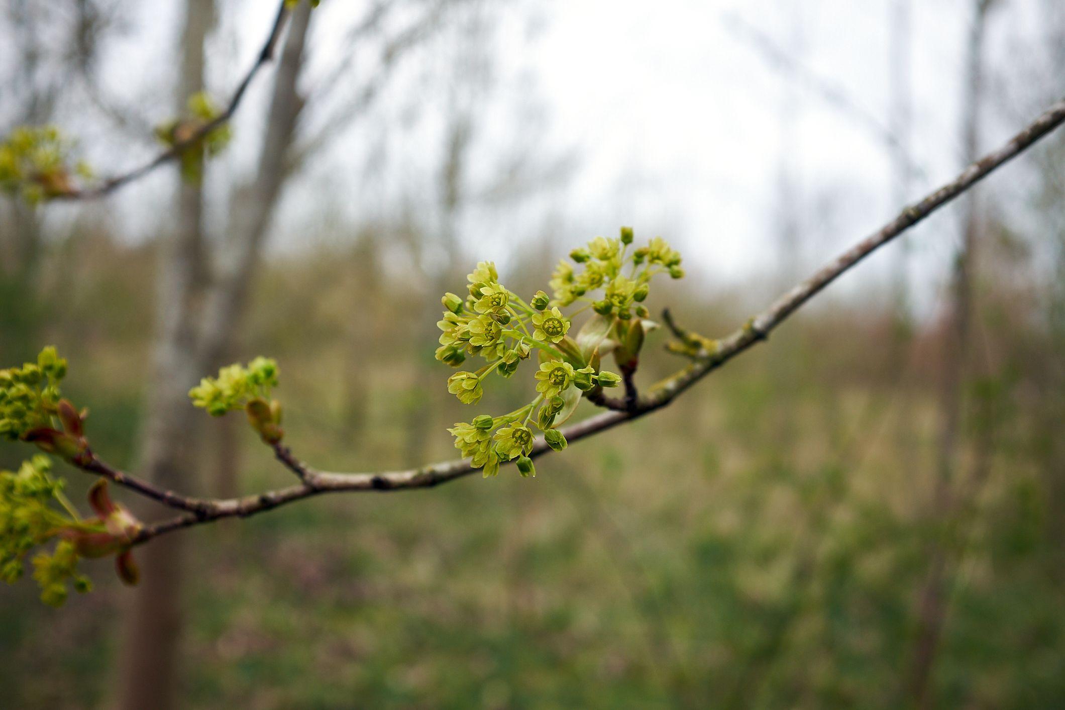 green spring blossom