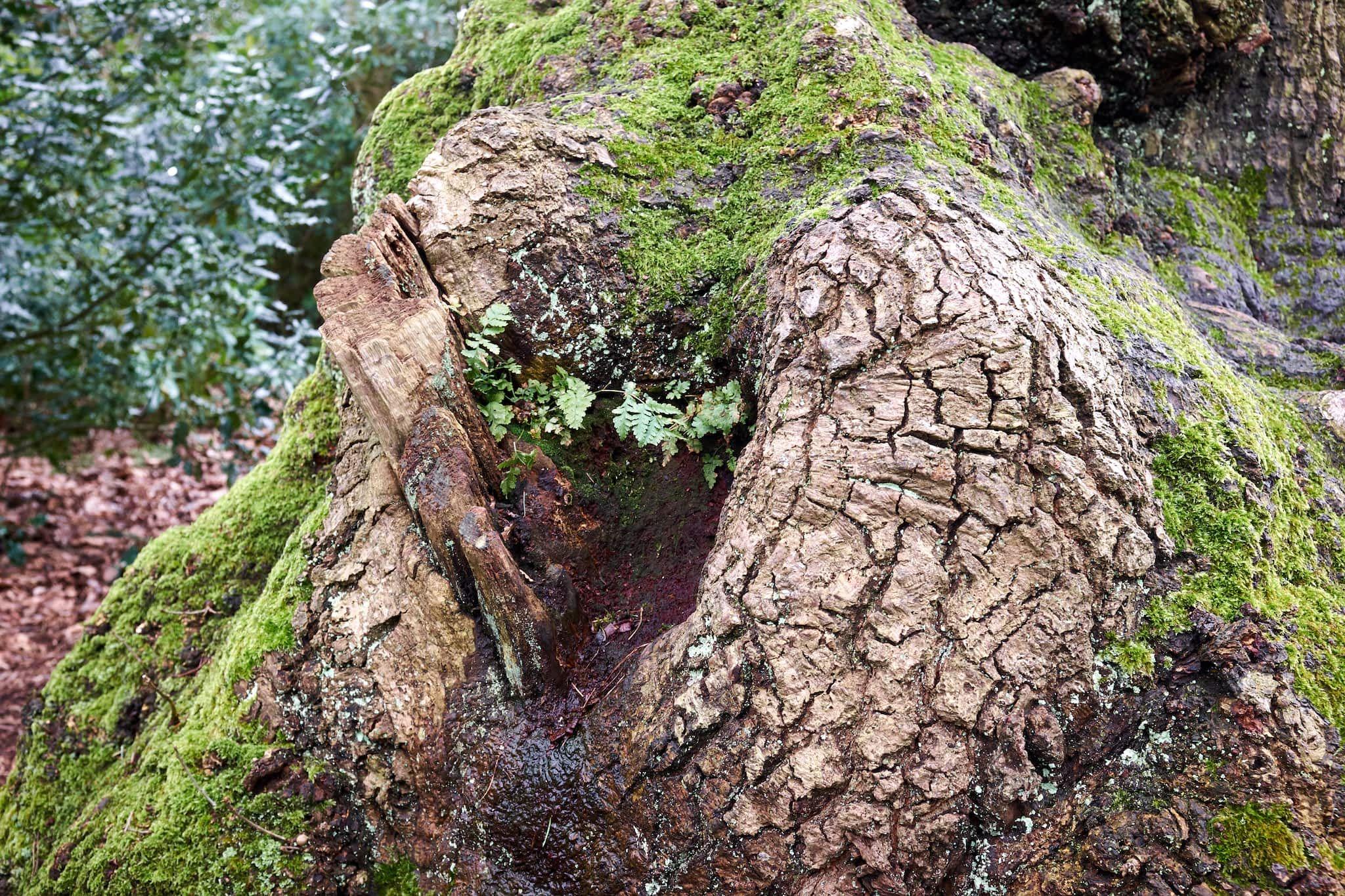 sheltered ferns