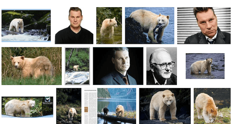 image search results for kermode